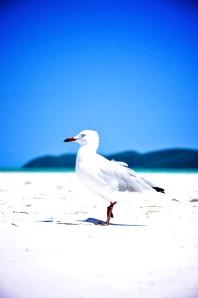Whitehaven Beach Whitsundays